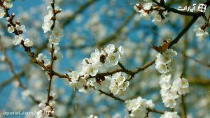 بهار واقعی یعنی آمدن یار